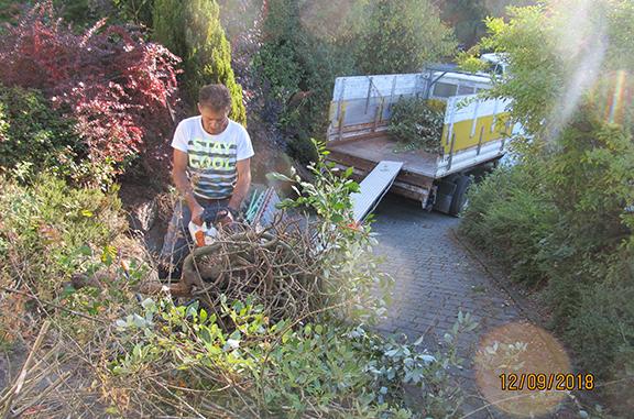 Baumfällungen und Wurzelentfernung