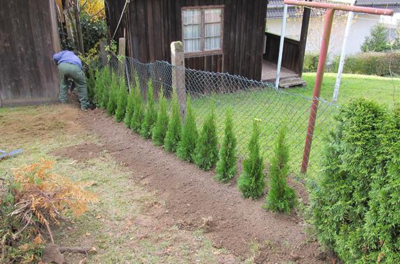 Heckenbepflanzung