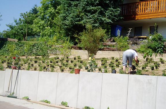 Pflegeleichte Bepflanzung mit Bodendecker
