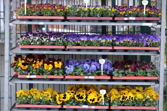 Das Frühjahr kommt mit tollen Farben