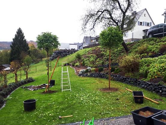 Heckenpflanzen und Bonsai